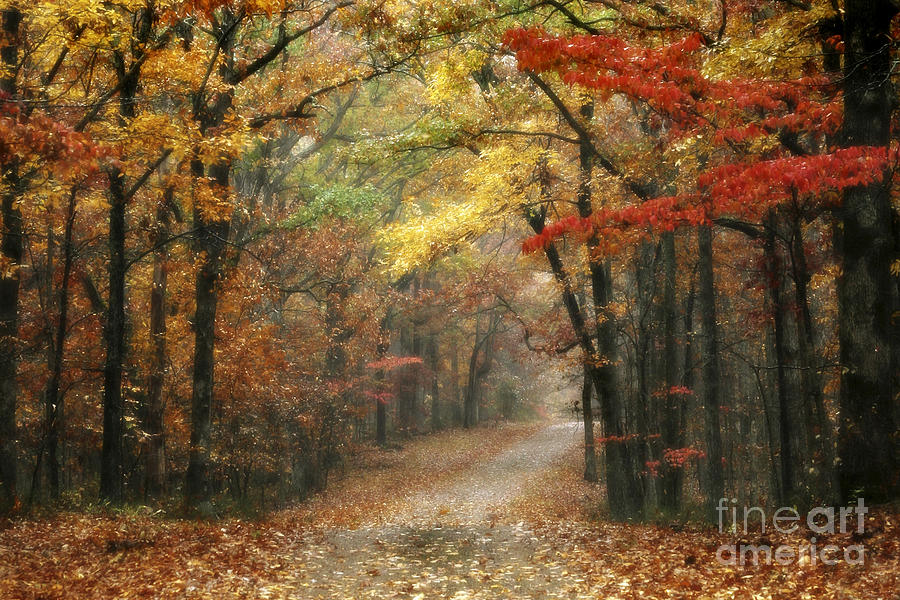 Natchez Trace Photograph - Old Trace Fall - Along The Natchez Trace In Tennessee by T Lowry Wilson