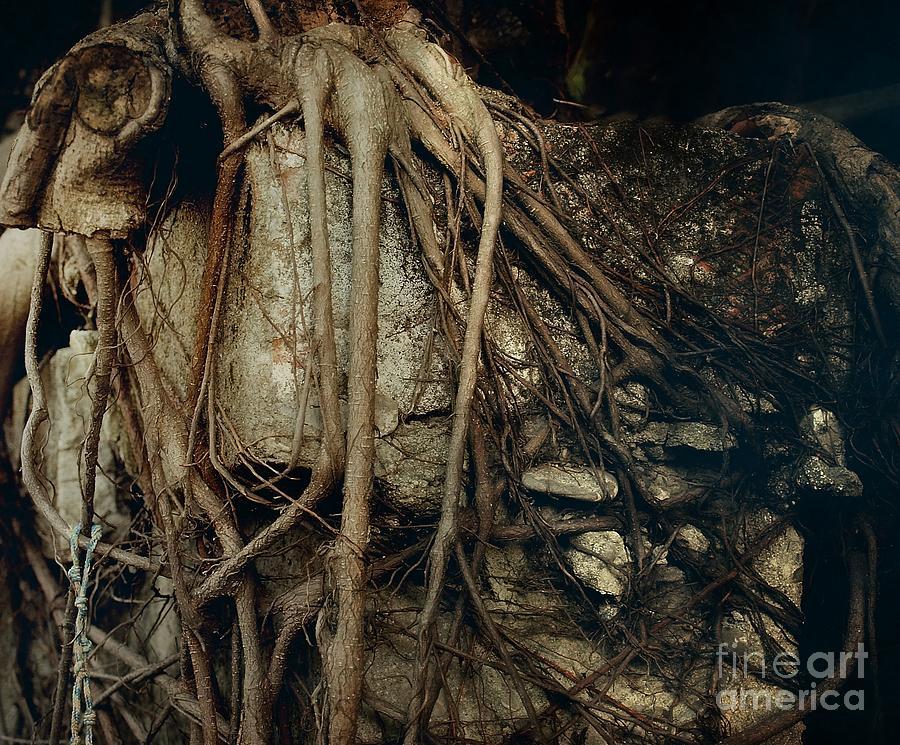 Tree Photograph - Old Tree On Broken Wall by Yali Shi