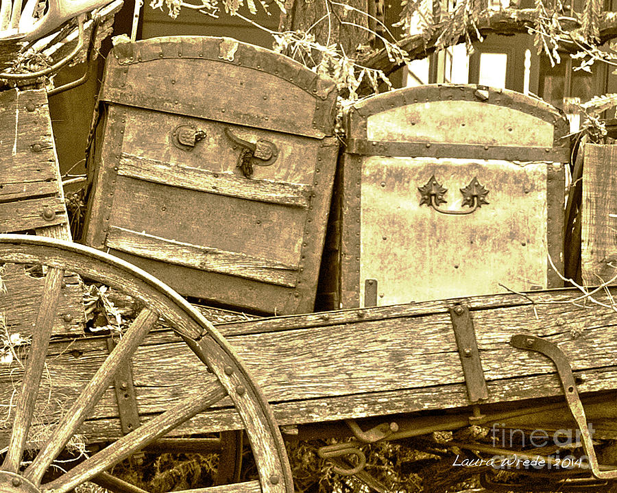 Genoa Photograph - Old Trunks In Genoa Nevada by Artist and Photographer Laura Wrede