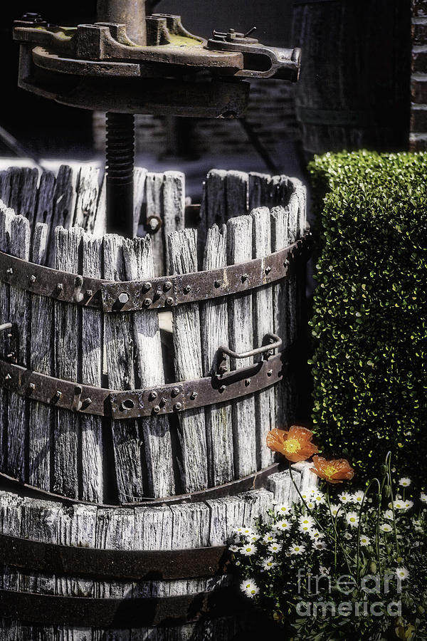 Agriculture Photograph - Old Wine Press  by George Oze