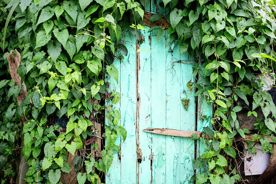Old Wooden Door Photograph by Real444