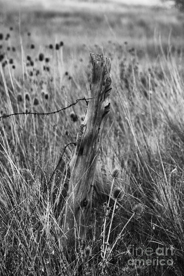 Wooden Fence Post Photograph - Old Wooden Fence Post in a Field by Jackie Farnsworth