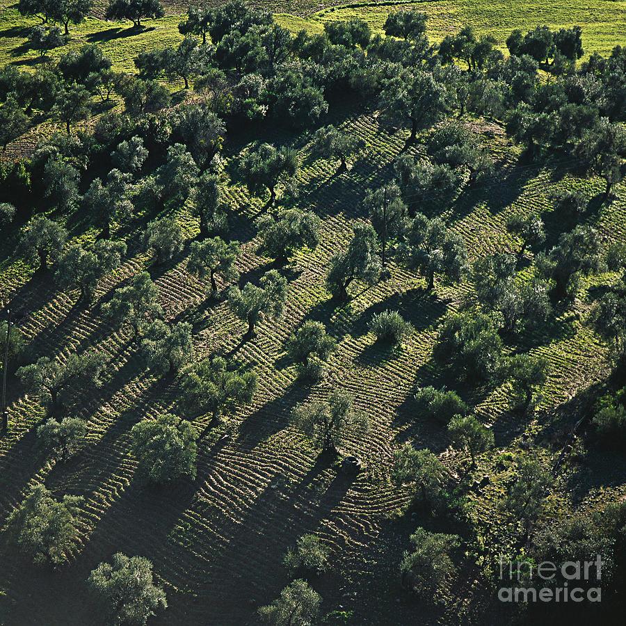 Heiko Photograph - Olive Farmland In Spain by Heiko Koehrer-Wagner