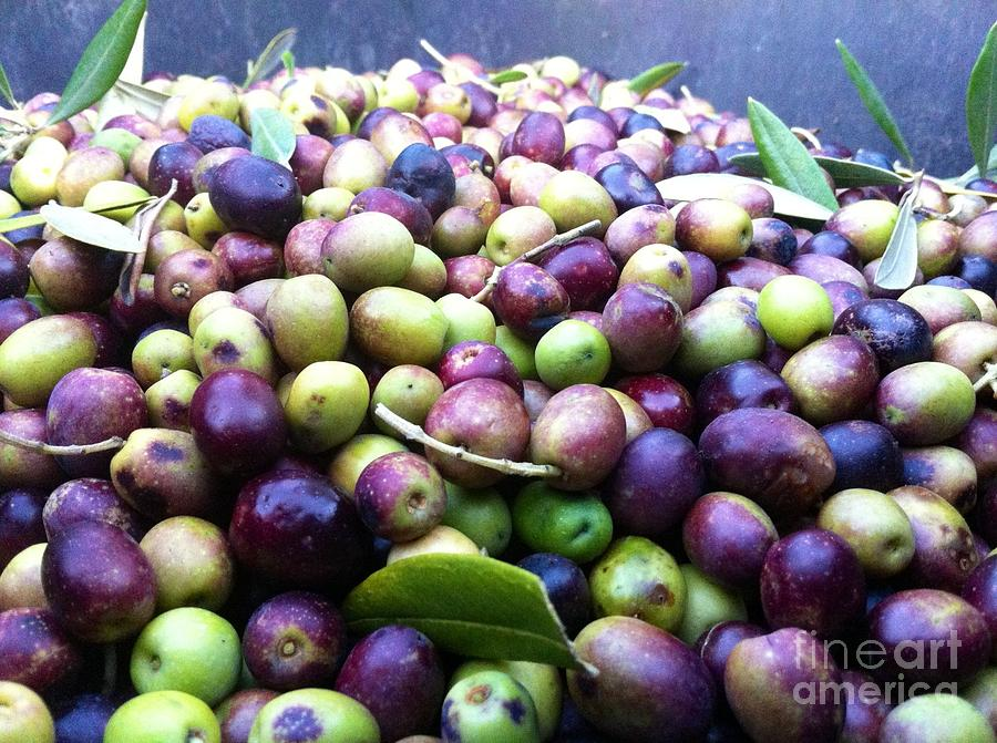 Olive Photograph - Olive Oil by Carolina Abolio