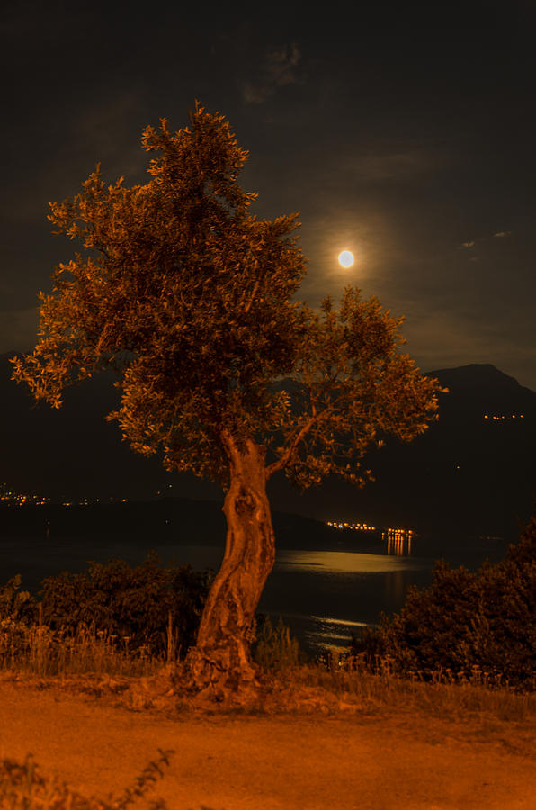 Alps Photograph - Olive Tree Under Moonlight by Jeffrey Teeselink