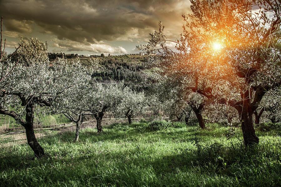 Olive Trees In Chieti, Abruzzo, Italy Photograph by Walter Zerla