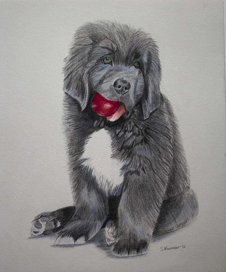 Oliver S Red Ball Drawing By Sharon Nummer