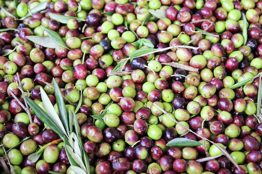 Olives Waiting To Be Milled Photograph by Courtney Hopkins