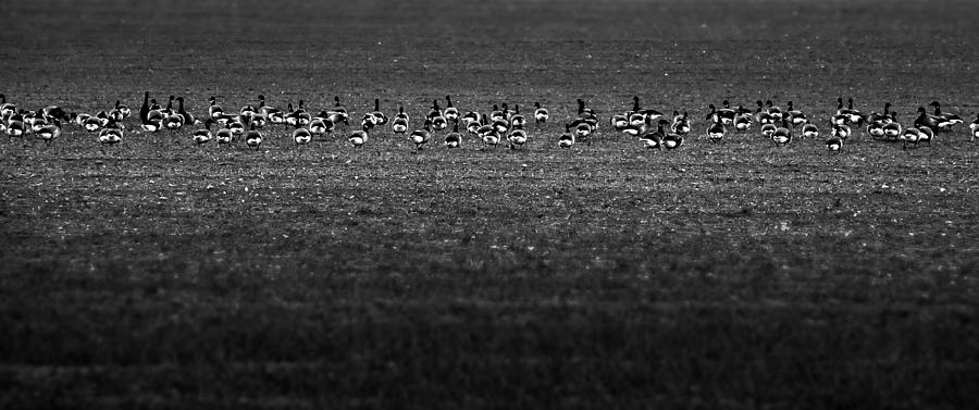 Bird Photograph - On A Field by Svetlana Sewell