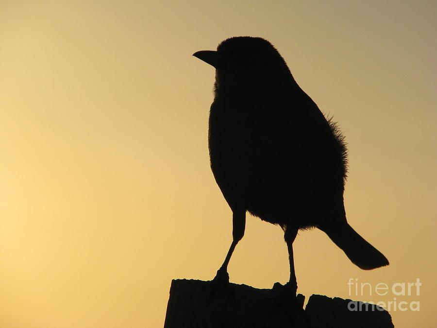 Bird Photograph - On A Post by Joseph Williams