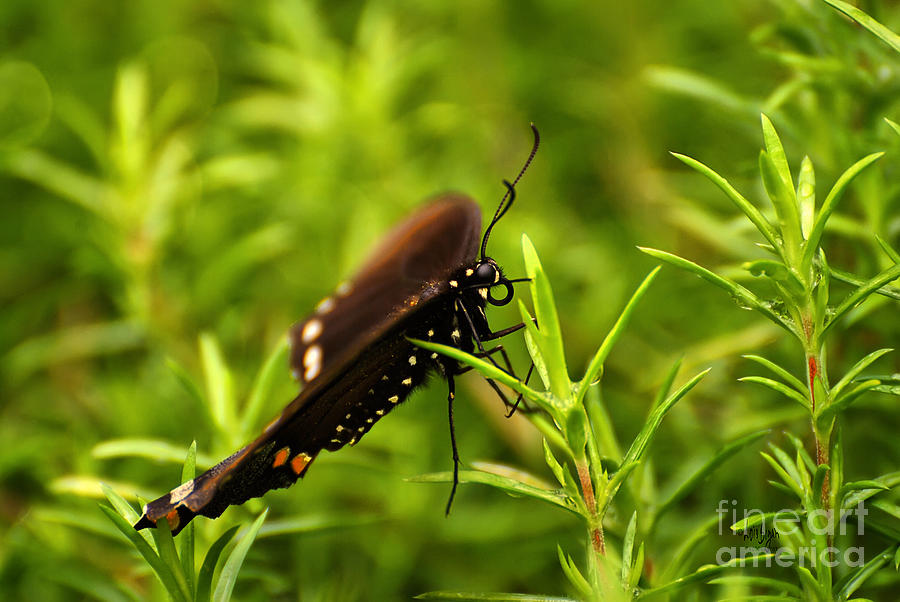 Butterfly Photograph - On A Rainy Day by Lois Bryan