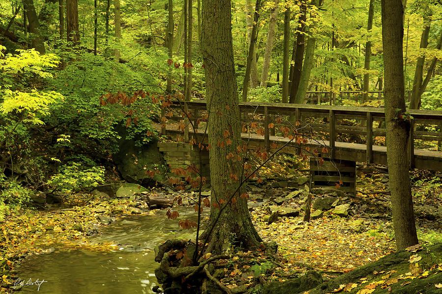 Autumn Digital Art - On An Autumn Walk by Phill Doherty