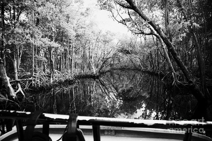 Airboat Photograph - On Board An Airboat Ride Through A Mangrove Jungle In Everglades City Florida Everglades Usa  by Joe Fox