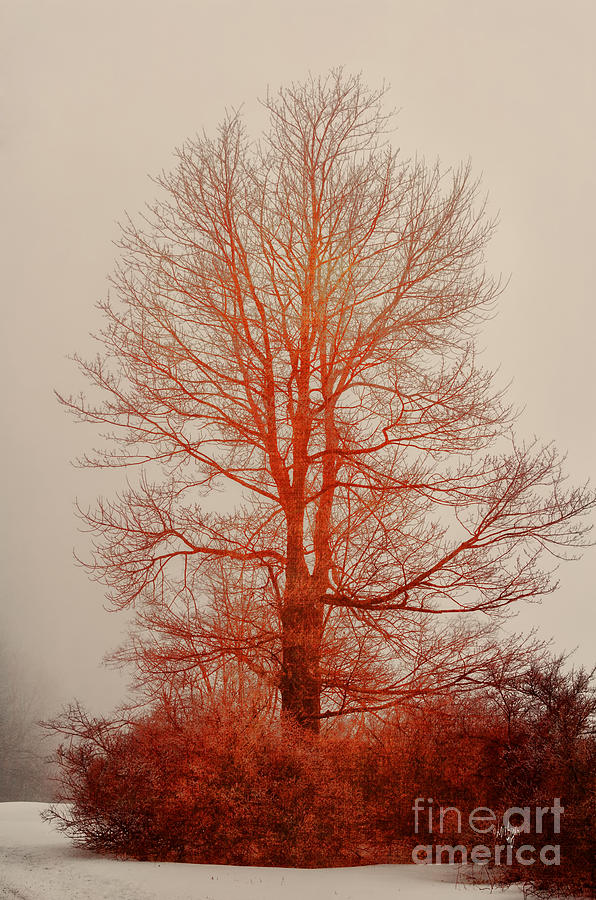 Tree Photograph - On Fire In The Fog by Lois Bryan