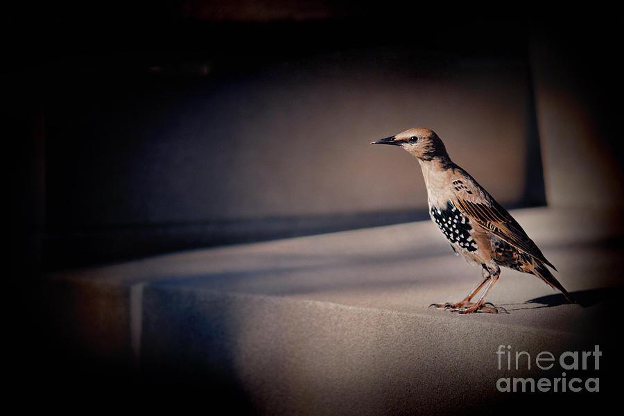 Bird Photograph - On Guard by Kristi Swift