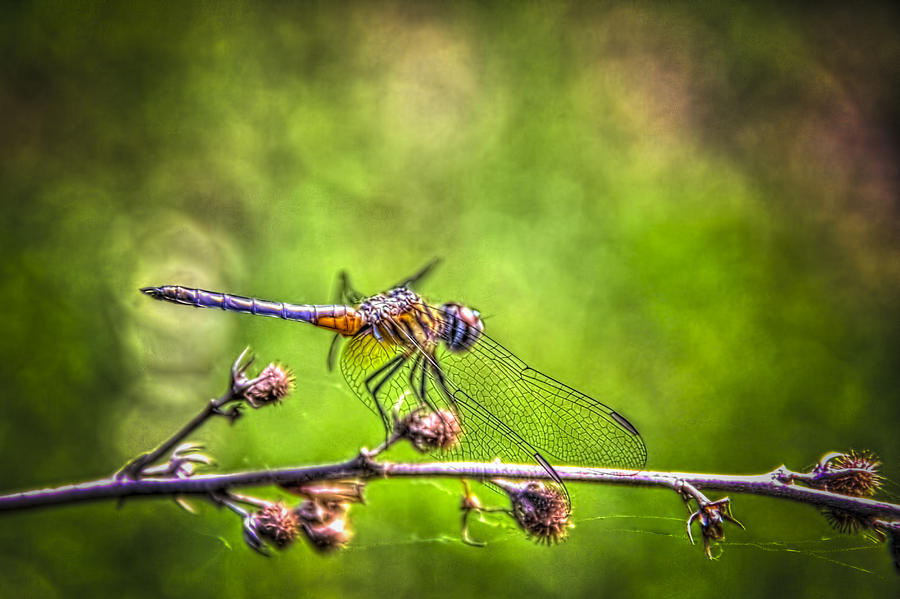 Bugs Photograph - On Lookout by Marvin Spates