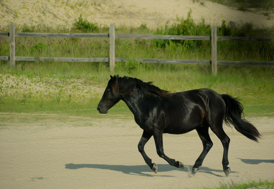Corolla Wild Horse Photograph - On My Way by Tracy Winter