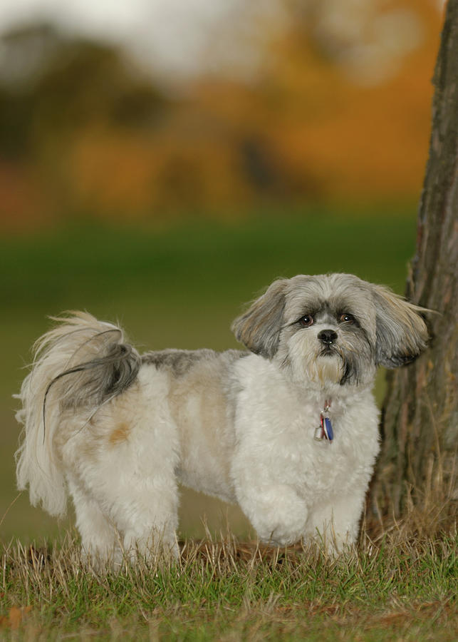 Dog Photograph - On Point by Arthur Fix