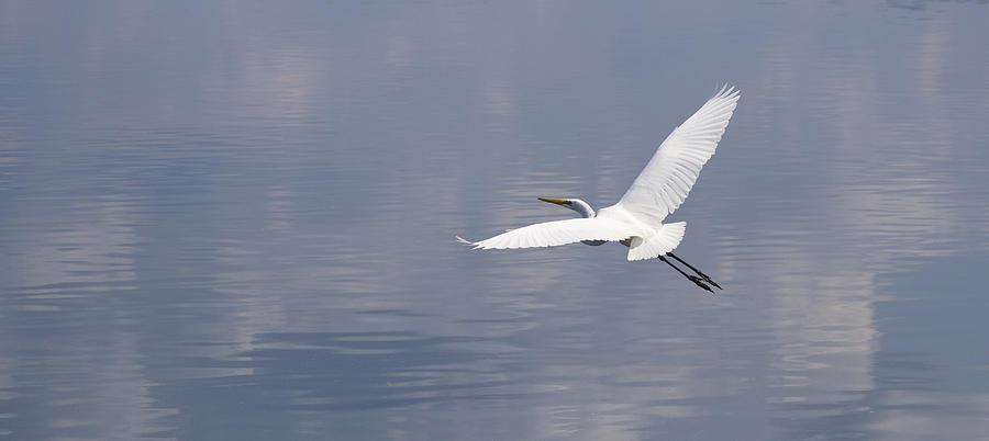 White Egret Photograph - On Swift Wings by Brian Grzelewski