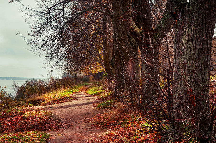Nature Photograph - On The Bank Of River Volga by Jenny Rainbow