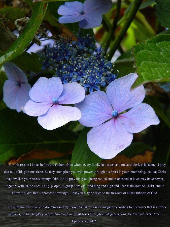 Eph 3:14-21 Photograph - On The Fence Hydrangea Eph 3 14 21 by Nicki Bennett