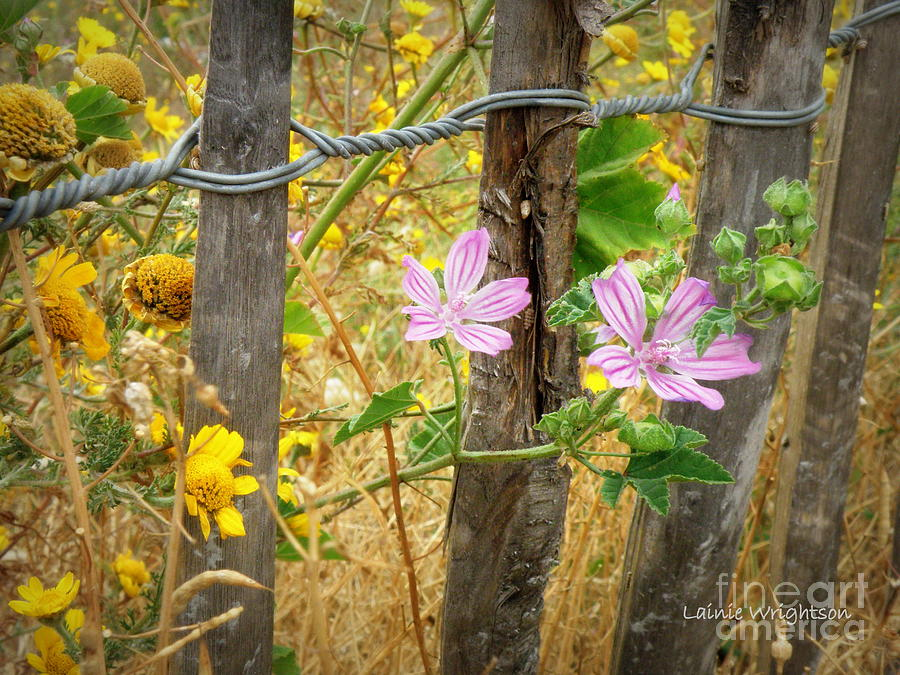 Fence Photograph - On The Fence by Lainie Wrightson
