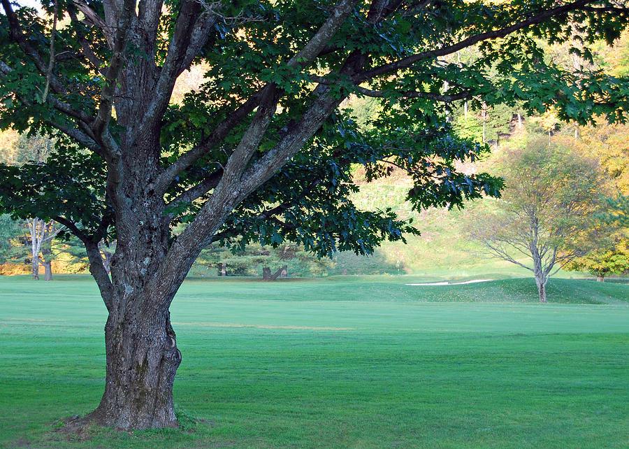 On The Golf Course Photograph by Gloria Merritt