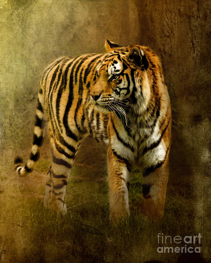 Bengal Tiger Photograph - On The Hunt by Betty LaRue