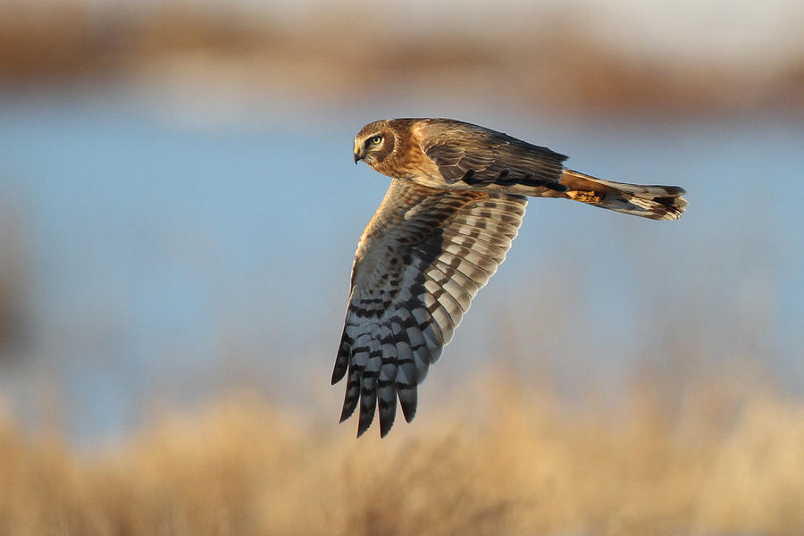 Bird Photograph - On The Hunt by Michael Rucci