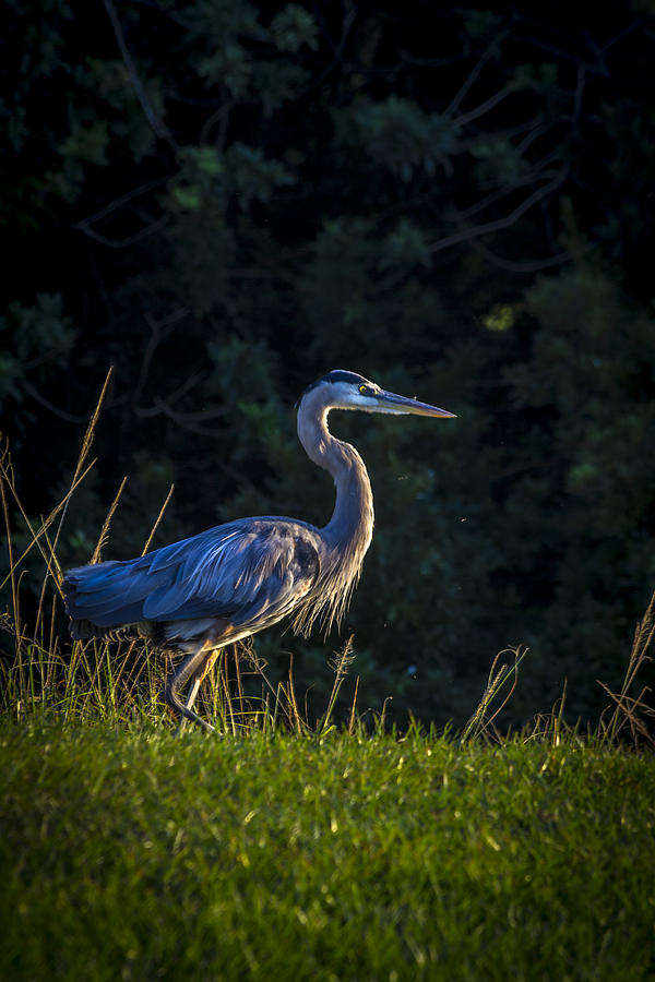 Lakeland Photograph - On The March by Marvin Spates