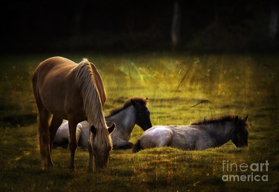 Pony Photograph - On The Meadow by Angel  Tarantella
