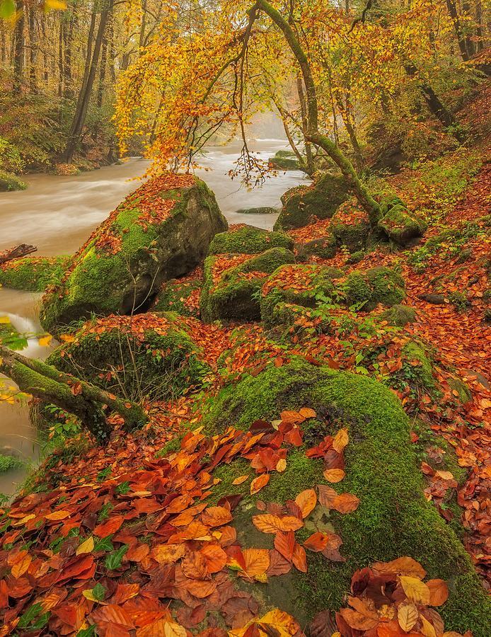 Autumn Photograph - On The Riverside by Maciej Markiewicz