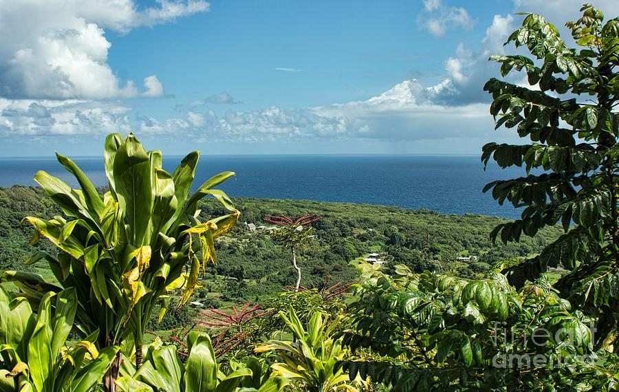 Outdoors Photograph - on the road to Hana by Peggy Hughes
