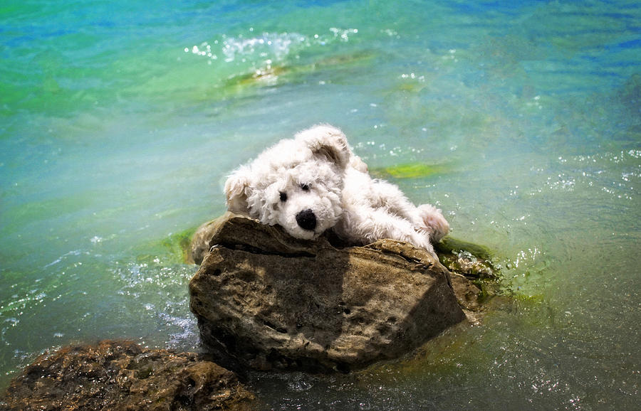 Bear Painting - On The Rocks - Teddy Bear Art By William Patrick and Sharon Cummings by Sharon Cummings