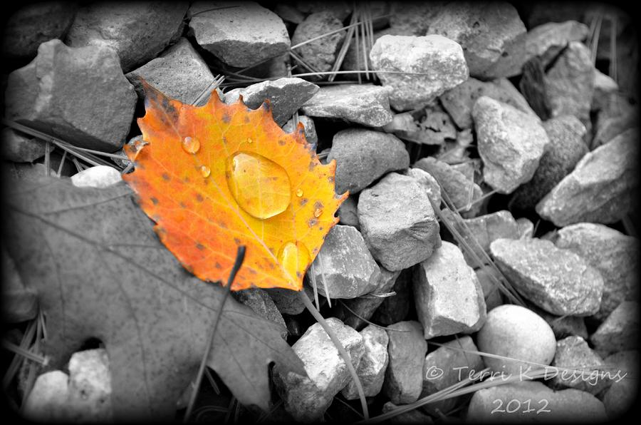 Leaf Photograph - On The Rocks by Terri K Designs
