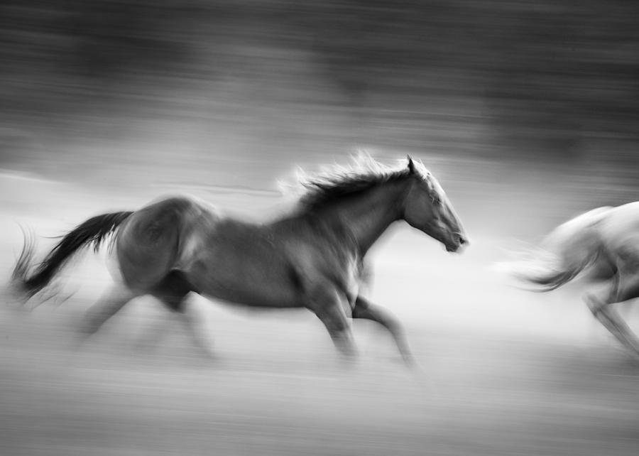 Horses Photograph - On The Run by Dianne Arrigoni