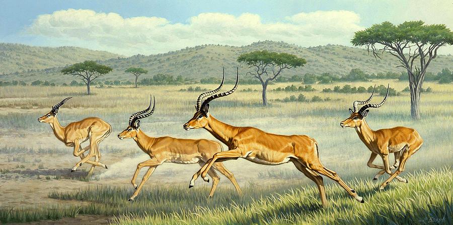 Wildlife Painting - On The Run -  Impala by Paul Krapf
