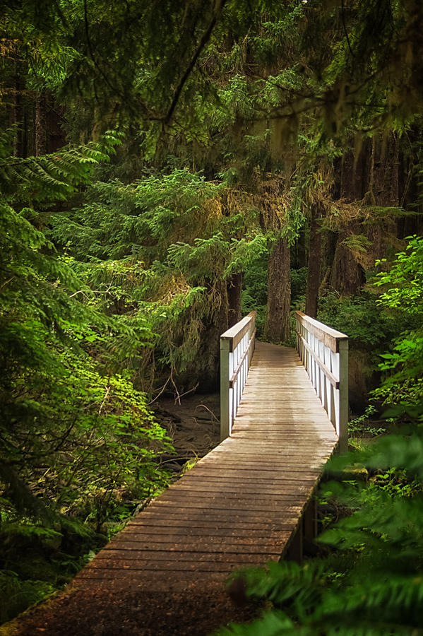 British Columbia Photograph - On The Trail by Carrie Cole