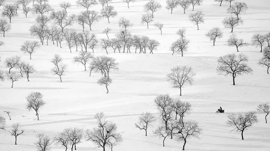 Winter Photograph - On The Way by Bingo Z