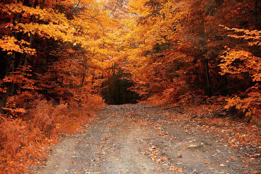 On The Way To Muskoka, Ontario, Canada Photograph by Roland Shainidze Photogaphy