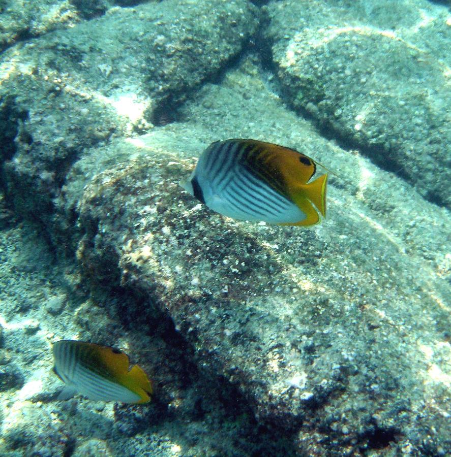 Fish Photograph - On Their Way by Karen Nicholson