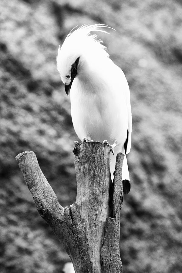 White Photograph - On top by Goyo Ambrosio