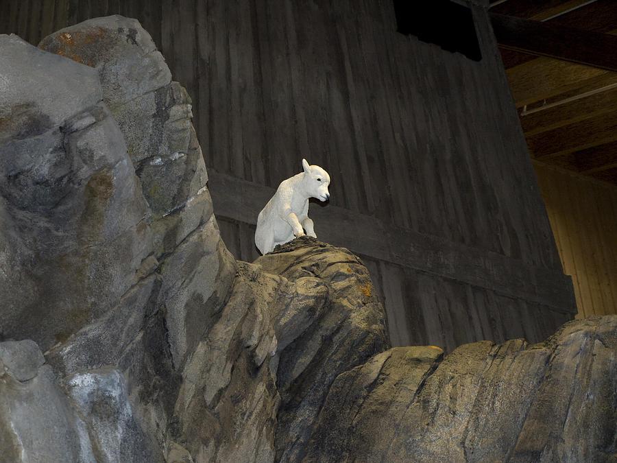 Animal Photograph - On Top Of The World by Tara Lynn