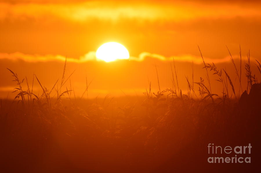 Sun Photograph - Ona Beach Sate Park by Sheldon Blackwell