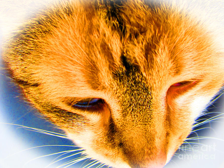 Cat Photograph - One Eye Not Working Well by Tina M Wenger