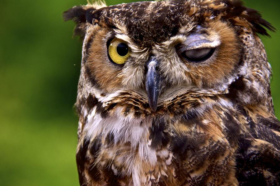 Birds Photograph - One Eyed Jack by Kathi Isserman