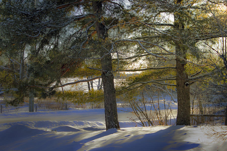 One Late Winter Afternoon Photograph