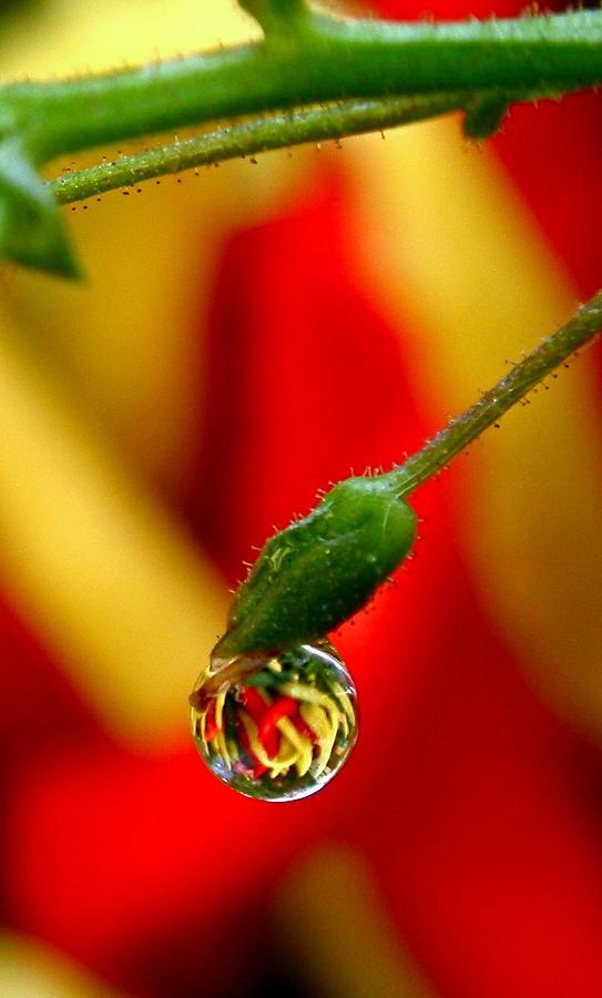 Rain Drop Photograph - One Raindrop by Rona Black
