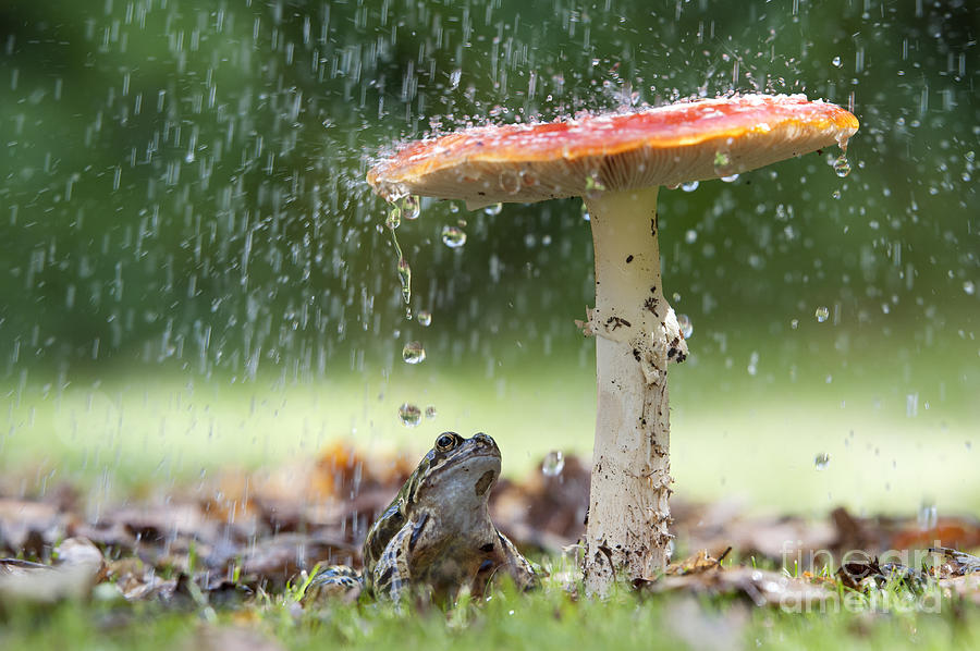 Frog Photograph - One Rainy Day by Tim Gainey