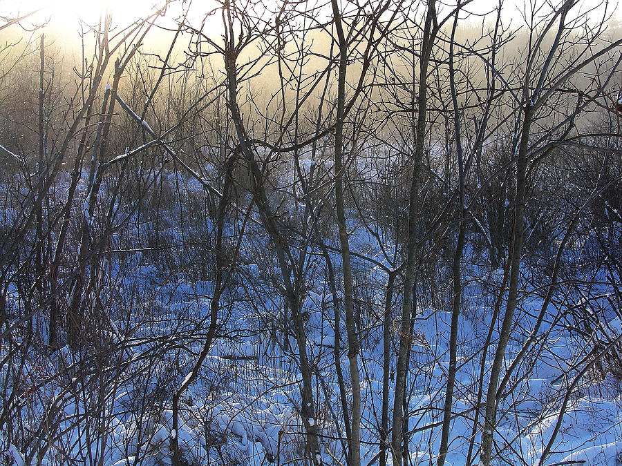 Palenville Photograph - One Solstice Morning In Palenville The Light Broke Through The Dew by Terrance DePietro